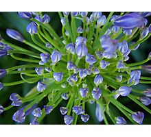 Purple Flower Floral-(Macro) Photographic Print