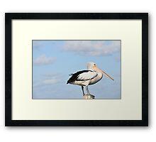 Pelican, Golden Beach, Caloundra, Sunshine Coast, Queensland Framed Print