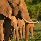 Tsavo East Elephants by citrineblue