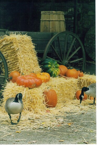 Geese and the Pumpkins by Carla Maloco