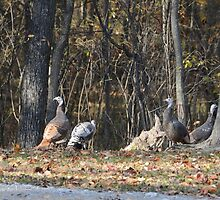Falls Feathered Friends by amyklein196203