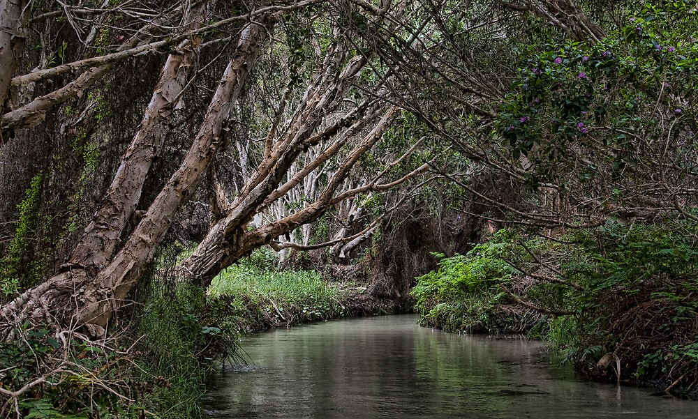 Eli Creek by eclectic1