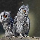Baby Owls by Krys Bailey