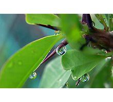 Window Droplet Photographic Print