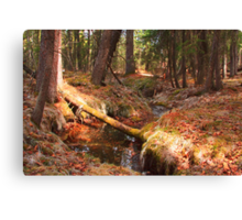 Soft forest floor Canvas Print