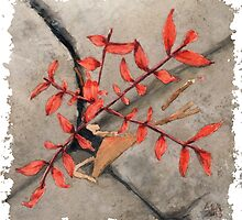 Tiny Tree by Amy-Elyse Neer