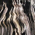 Waves of the Wood by Annabelle Evelyn