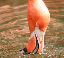 Flamingo takes a break by Keith Brokaw