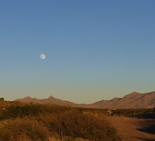 Evening Moon Over the Desert by CynLynn