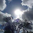 Jacaranda sunburst by fourthangel