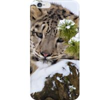Young Snow Leopard in the snow.  iPhone Case/Skin