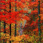 MAPLES,AUTUMN by Chuck Wickham