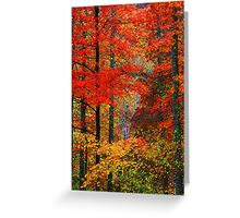 MAPLES,AUTUMN Greeting Card
