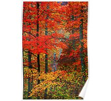 MAPLES,AUTUMN Poster