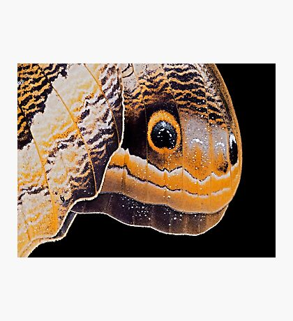 Butterfly or Snake Head Photographic Print