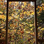 Window on Autumn by AnnDixon