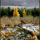 Baker River Valley Poster/Card by Wayne King