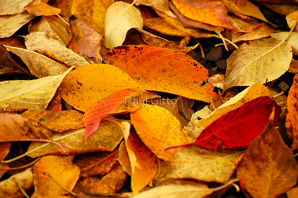 Leaves of Autumn by Paul Gitto