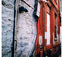 Back Alley by Adam Excell