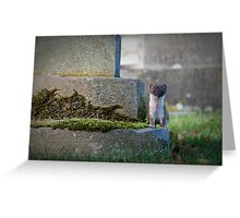 Stoat Among The Gravestones Greeting Card