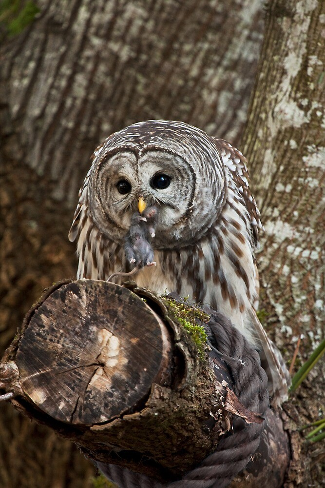 OWL & PREY by Sandy Stewart