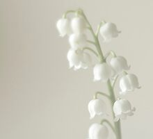 One stem of Lily-of-the-valley by SuzanAlmond