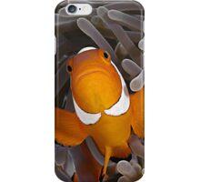 Anemone Fish iPhone Case/Skin