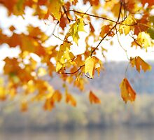 Susquehanna Leaves by Lynn McCann