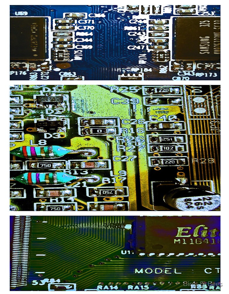 Circuit Triptych by Birds &  Bees