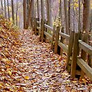 Leaf Lined Path.....- calendar shot  ^ by ctheworld