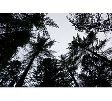 Forest Top Photographic Print