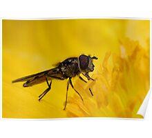 Pollen Face Poster