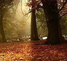 Autumn in the Wood by lallymac
