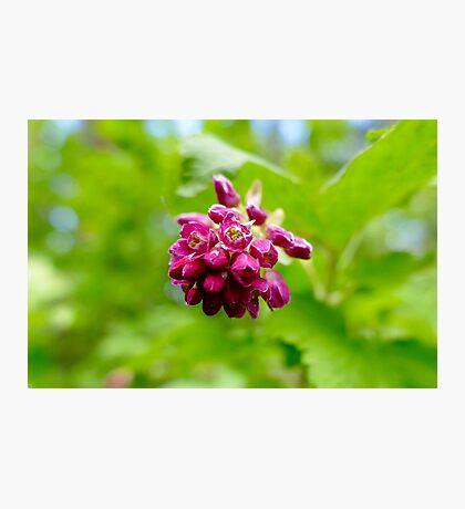 Macro Flower Photographic Print