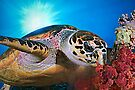 Hawksbill Turtle by Henry Jager