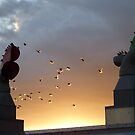 starlings and windcowls by lukasdf