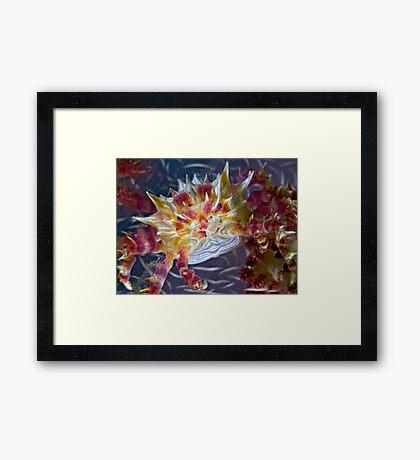 Candy Crab Framed Print