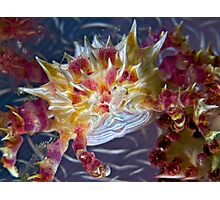 Candy Crab Photographic Print