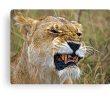 Lion's Mimic Canvas Print