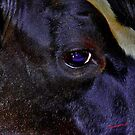 Eye of the Black Cow by itchingink