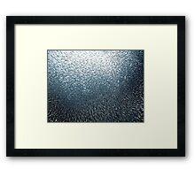 Sardines Firework Framed Print