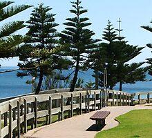 Pine Walk by ScenerybyDesign