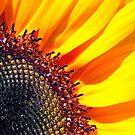 Sunflower by Eyal Nahmias