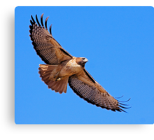 1101091 Red Tailed Hawk Canvas Print