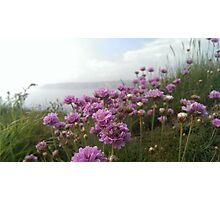 Flowers by the Coast Photographic Print