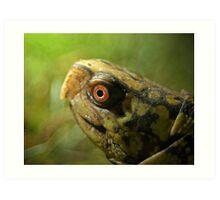 Gulf Coast Box Turtle Art Print