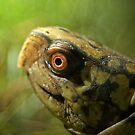 Gulf Coast Box Turtle by Michael L Dye