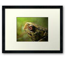 Gulf Coast Box Turtle Framed Print