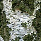 Tree Bark... by Wayne Gerard Trotman