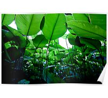 Leaf Canopy Poster